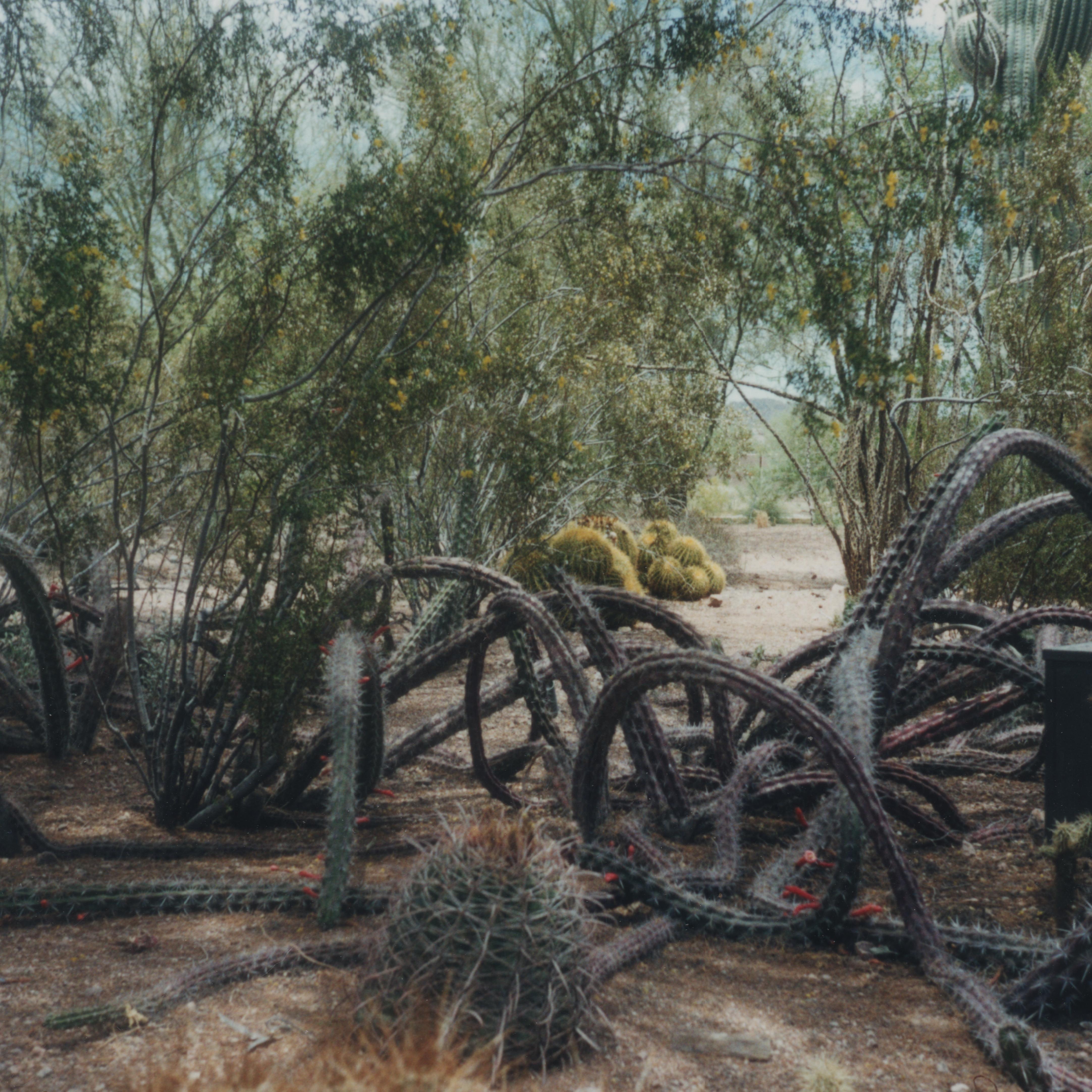 Dans le désert de Sonora